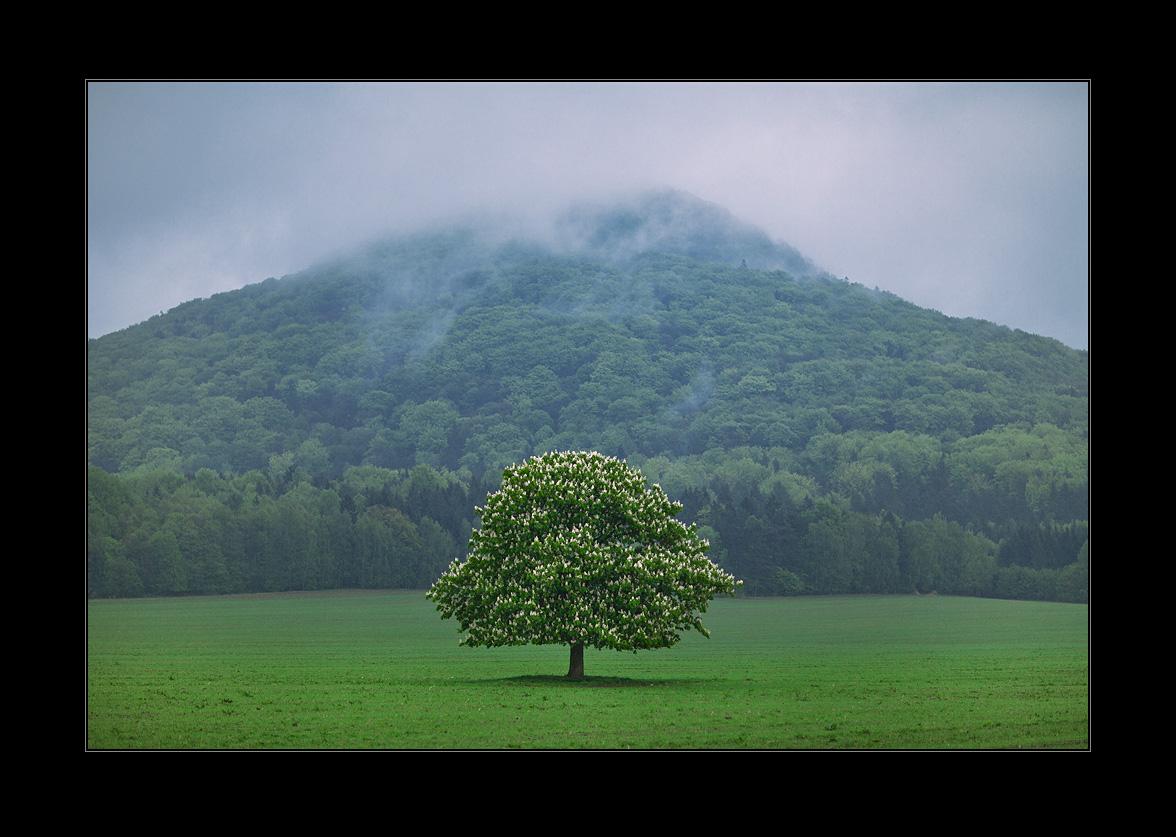 zelené pahorky českošvýcarské