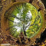 Mám rád les !