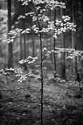 Lesní intimita II.