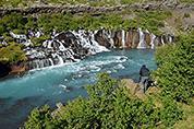 Islandský stojánkář ....