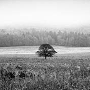 Stromy IX.