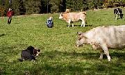 Jak fotopivaři kravili