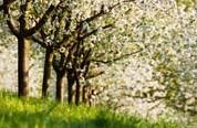 Jarní sad