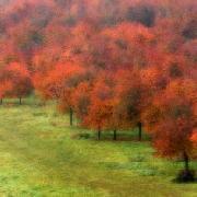 Podzim pana Moneta