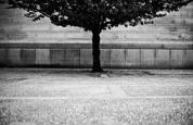 Hradní strom - b