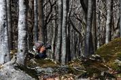 Ivan v bučinách na Monte Amiata