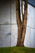 Městský strom